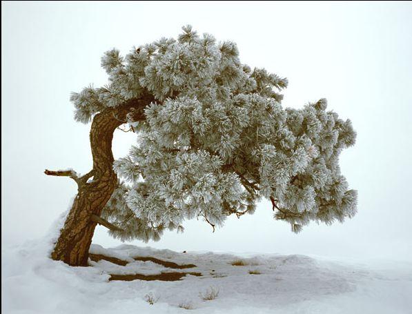 Kış, soğuk, kar ve yalnızlık