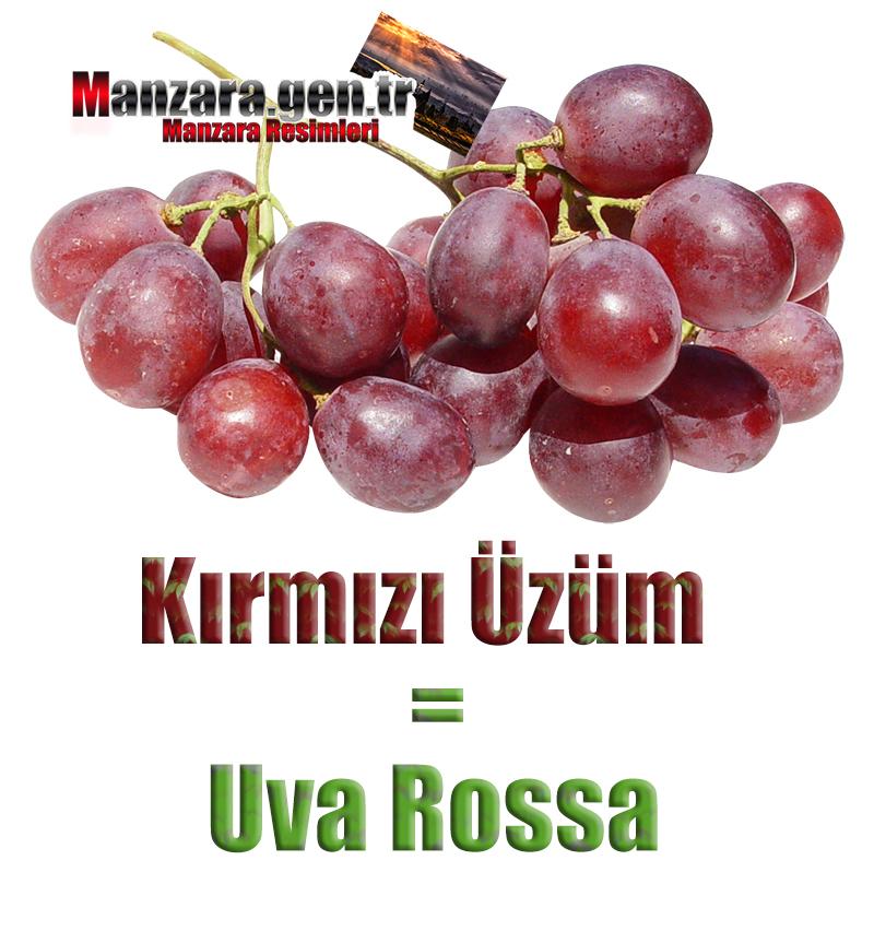 Kırmızı üzümün İtalyancası Nedir ? Kırmızı üzüm İtalyanca Nasıl Yazılır ? Che cos'è il turco in uva rossa? Come scrivere uva rossa in turco?