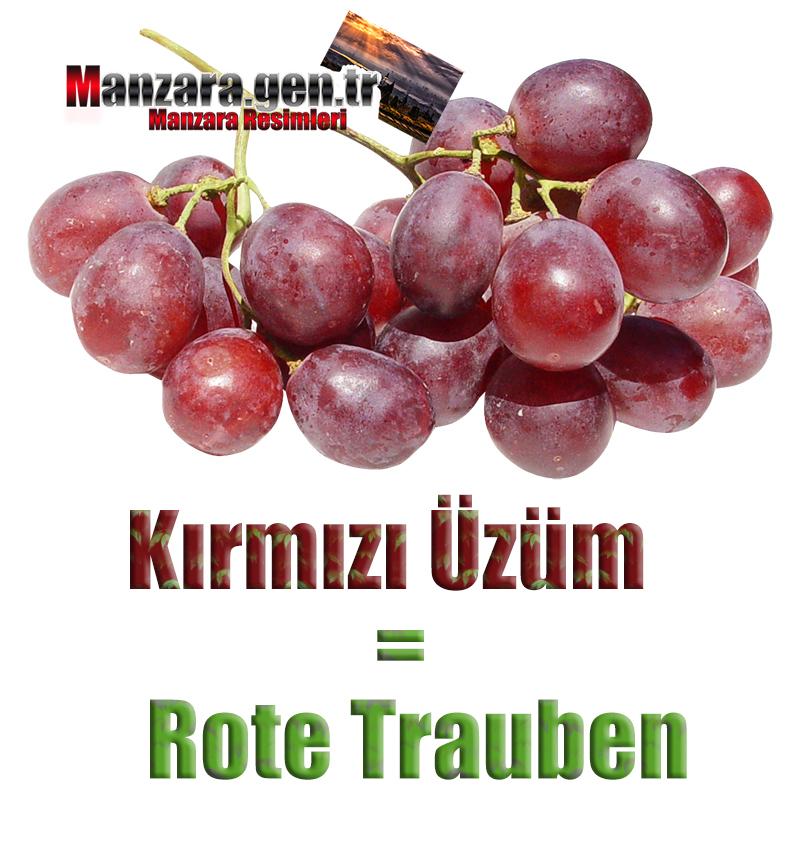 Kırmızı Üzümün Almancası Nedir ? Kırmızı Üzüm Almanca Nasıl Yazılır ? Was ist Rote Trauben Türkisch? Wie schreibe ich Rote Trauben auf Türkisch?