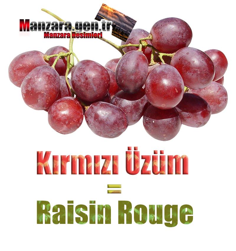 Fransızca Meyve İsimleri - Kırmızı üzümün Fransızcası Nedir ? Kırmızı üzüm Fransızca Nasıl Yazılır ? Quel est le turc de raisin rouge ? Comment écrire la raisin rouge en turc?