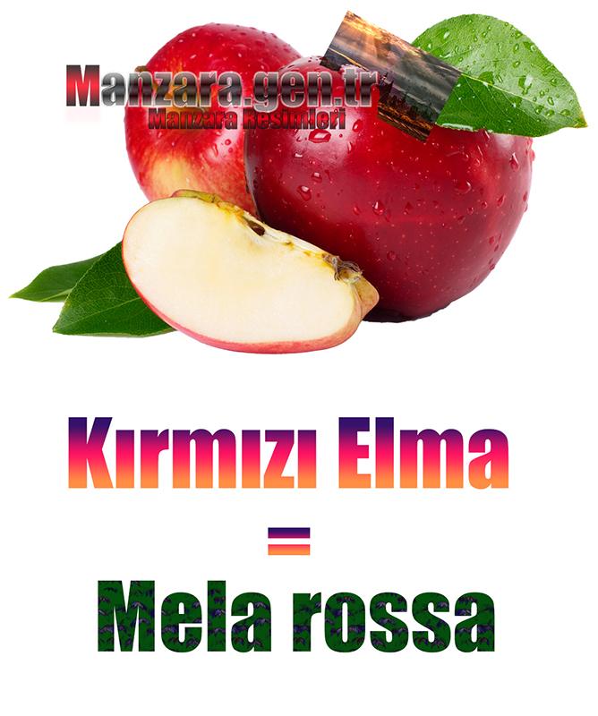 Kırmızı elmanın İtalyancası Nedir ? Kırmızı elma İtalyanca Nasıl Yazılır ? Che cos'è il turco in mela rossa? Come scrivere mela rossa in turco?