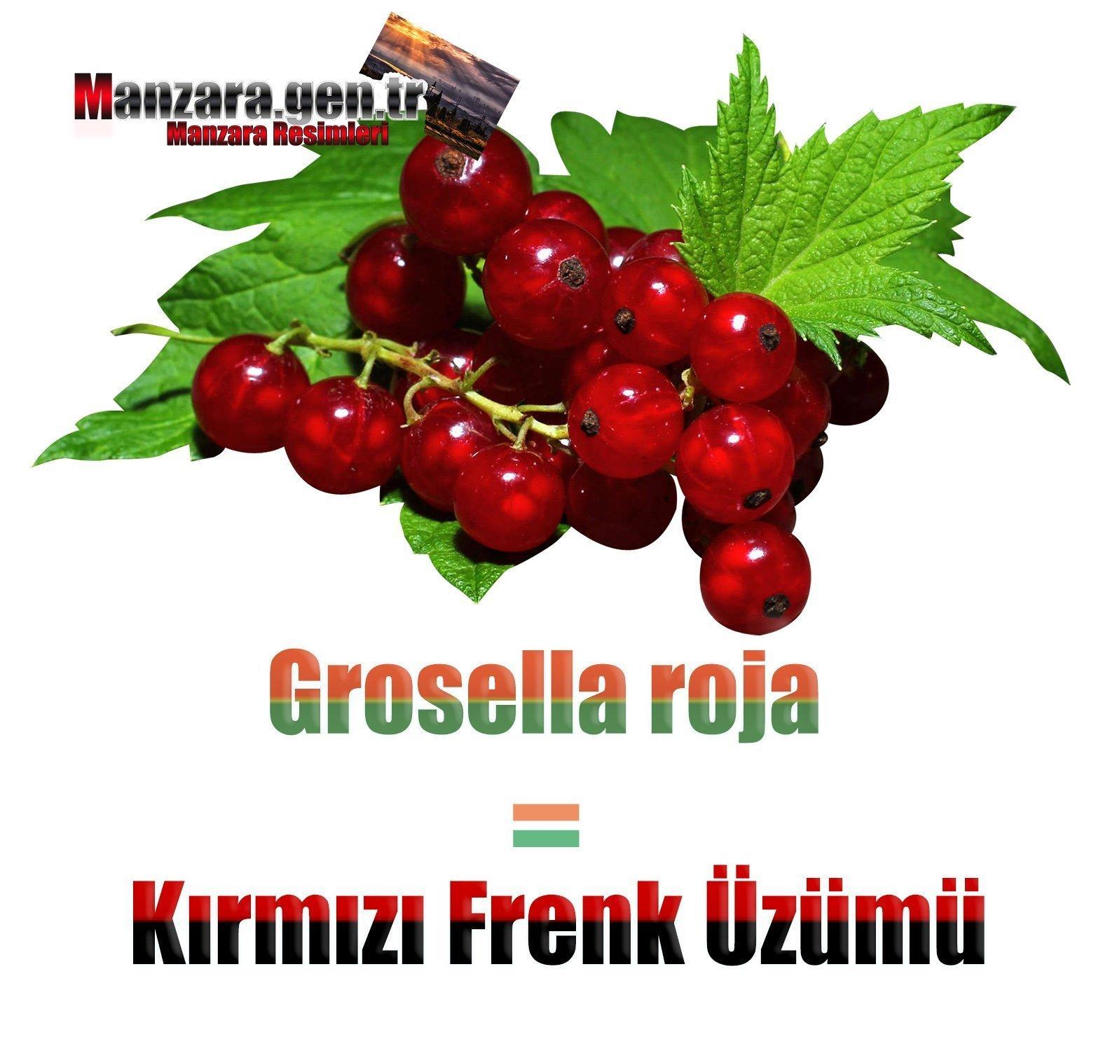 İspanyolca Meyve İsimleri - Kırmızı Frenk Üzümü İspanyolcası (Grosella roja)