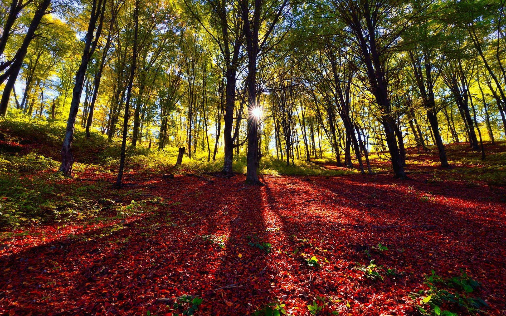 Kırmızı Orman