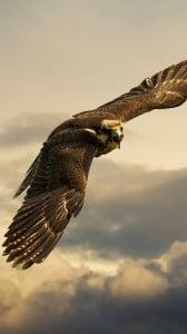 Kızgın Kuş iPhone 6 plus