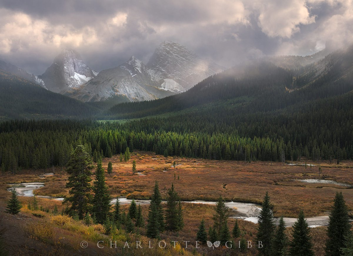 Kanada Ormanları