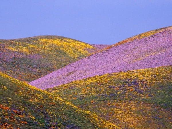 Kanyondaki çiçekler