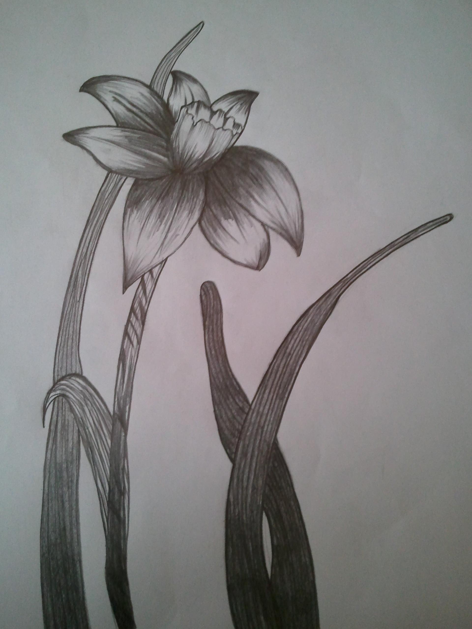 Karakalem nergiz çiçeği