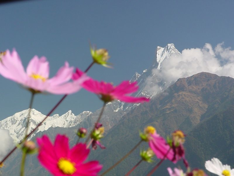 Karlı Çiçekli Dağlar