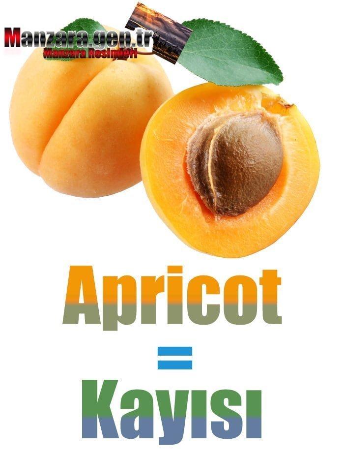 Kayısının İngilizcesi (Apricot)
