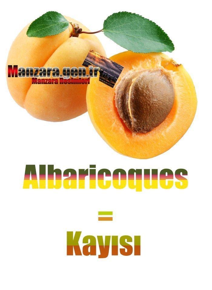 Kayısının İspanyolcası (Albaricoques)