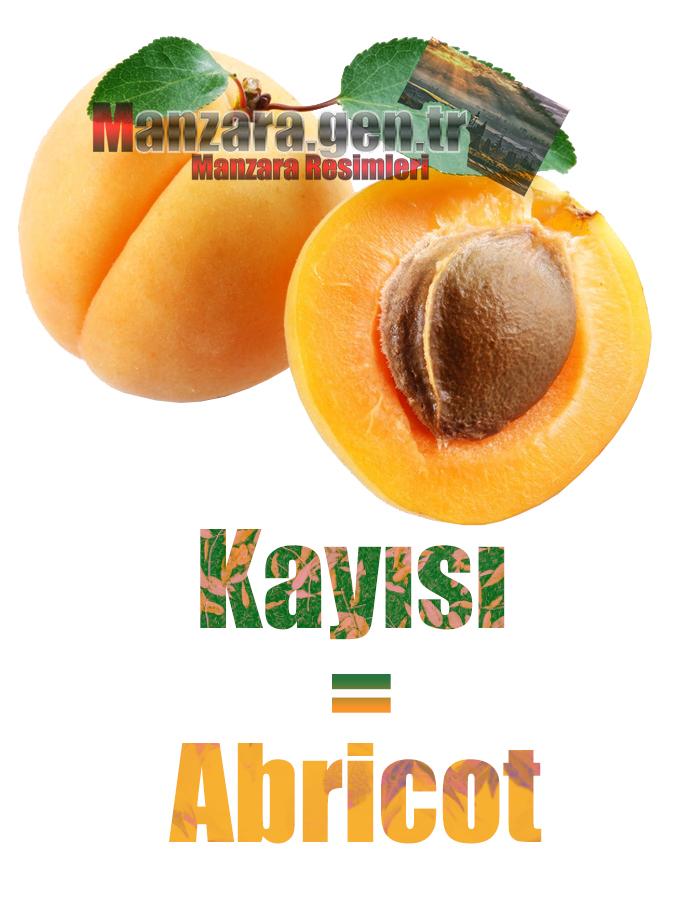 Fransızca Meyve İsimleri - Kayısının Fransızcası Nedir ? Kayısı Fransızca Nasıl Yazılır ? Quel est le turc de abricot ? Comment écrire la abricot en turc?