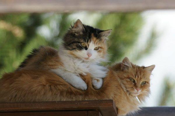 Kedilerin Farklı Halleri- Kedi Samimiyeti
