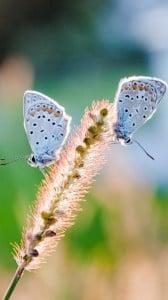 Kelebekler 1080x1920