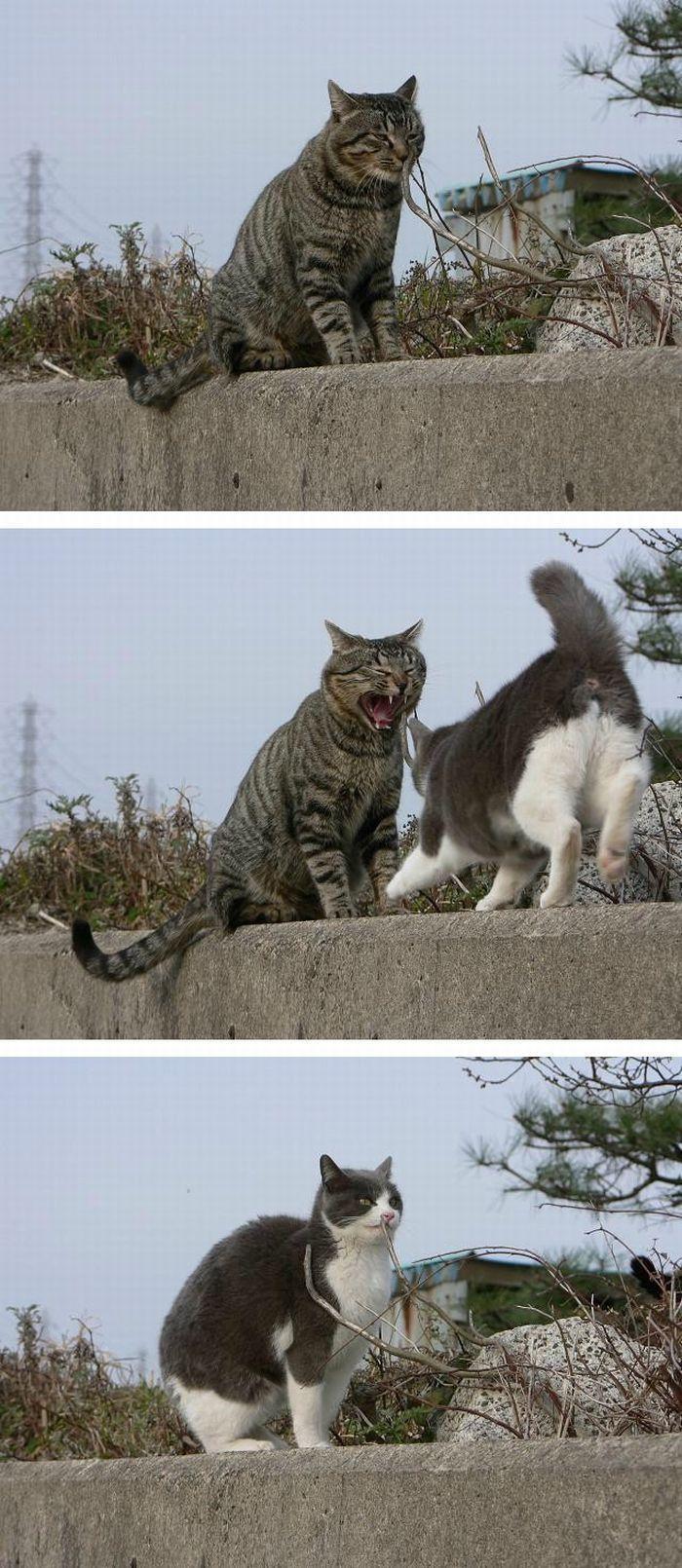 Komik Kedi Fotoğrafları