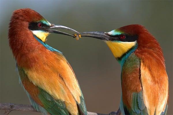 Kuş paylaşımı