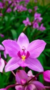 Mükemmel Çiçek Fotoğrafı 1080x1920