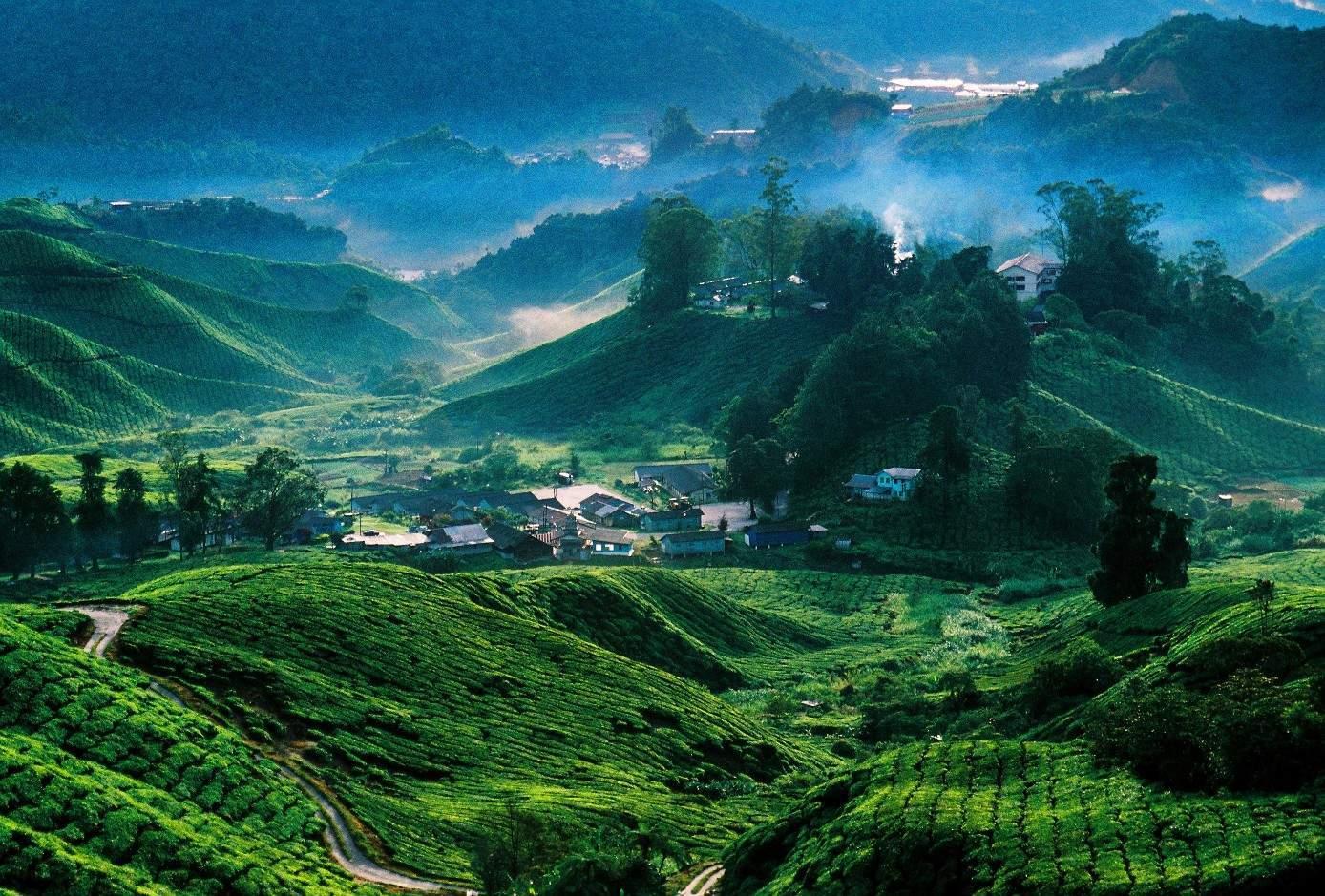 Malezya çay bahçeleri