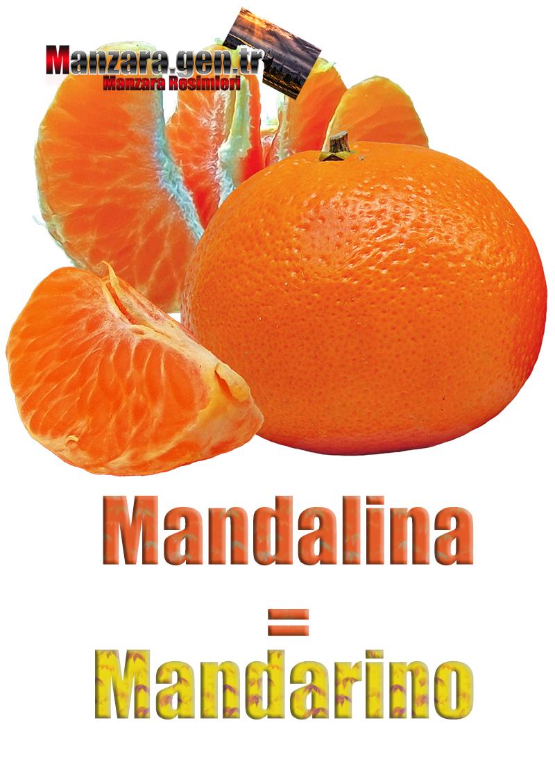 Mandalinanın İtalyancası Nedir ? Mandalina İtalyanca Nasıl Yazılır ? Che cos'è il turco in mandarino? Come scrivere mandarino in turco?