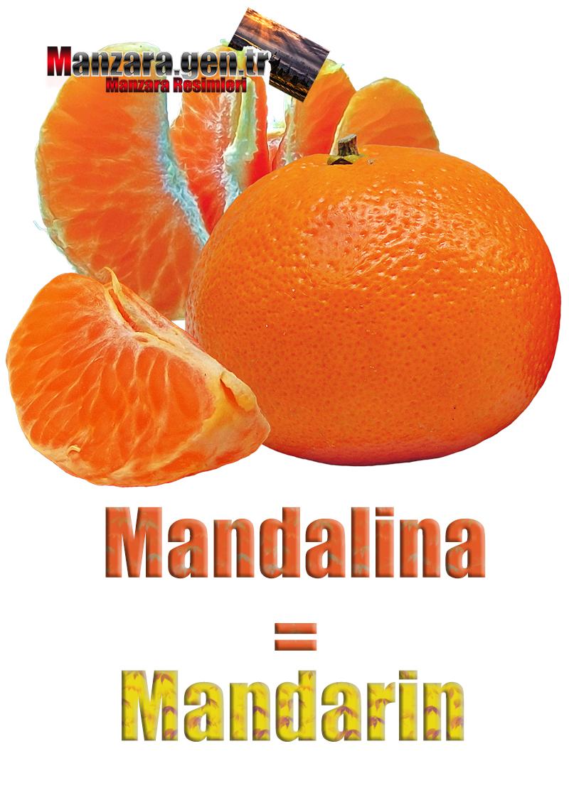 Almanca Meyve İsimleri - Mandalinanın Almancası Nedir ? Mandalina Almanca Nasıl Yazılır ? Was ist Mandarin Türkisch? Wie schreibe ich Mandarin auf Türkisch?