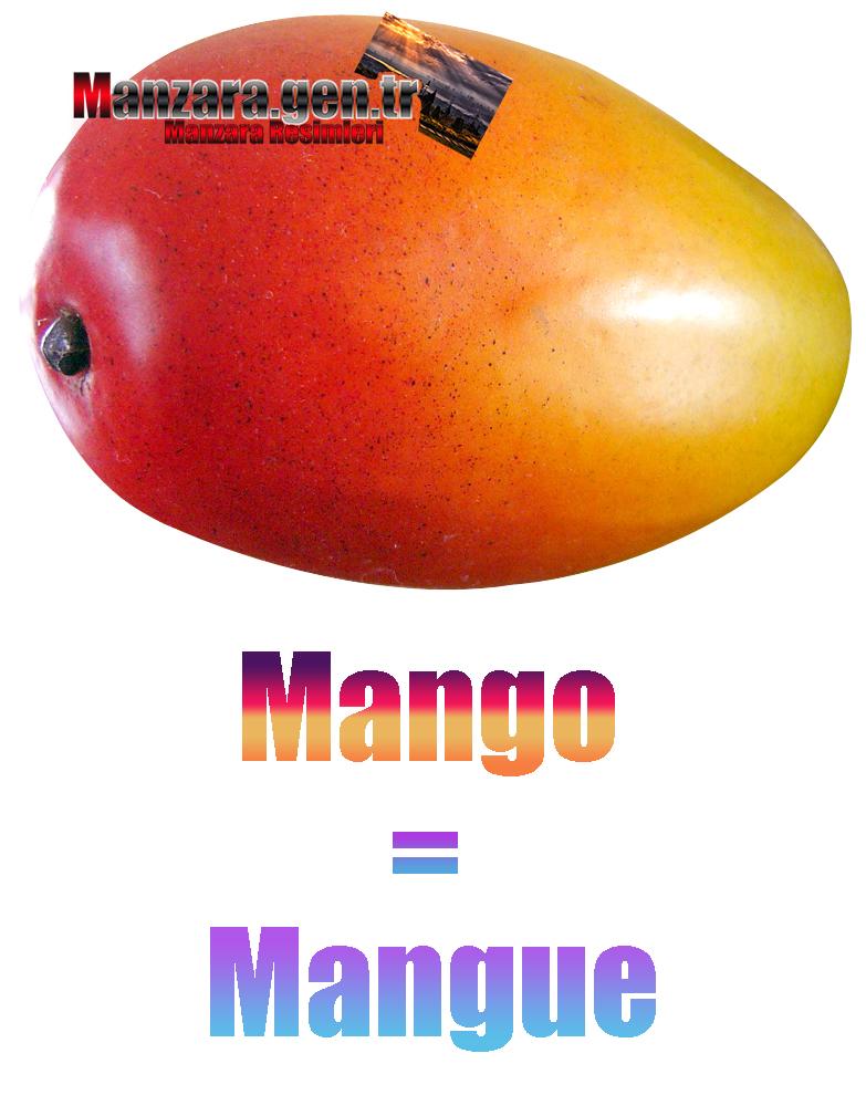 Fransızca Meyve İsimleri - Mangonun Fransızcası Nedir ? Mango Fransızca Nasıl Yazılır ? Quel est le turc de mangue ? Comment écrire la mangue en turc?