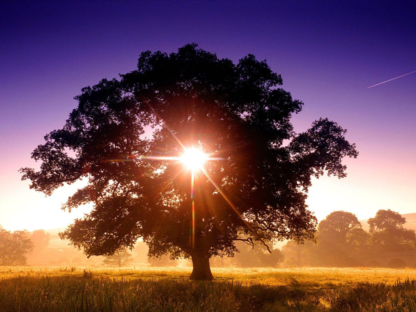 Manzara gün batımı-105
