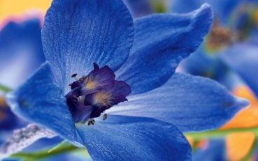 Mavi çiçek resmi