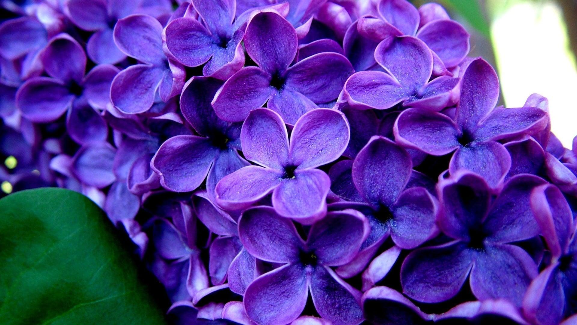 Mor çiçekler