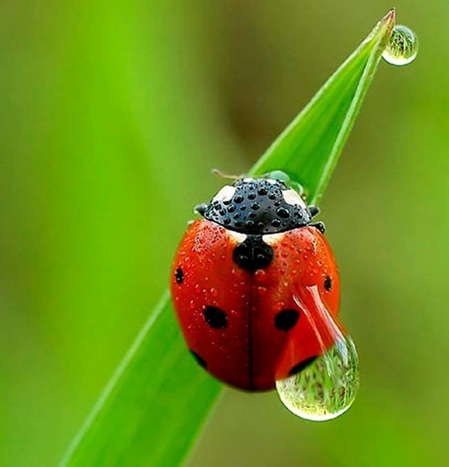 Muğla Uğur Böceği