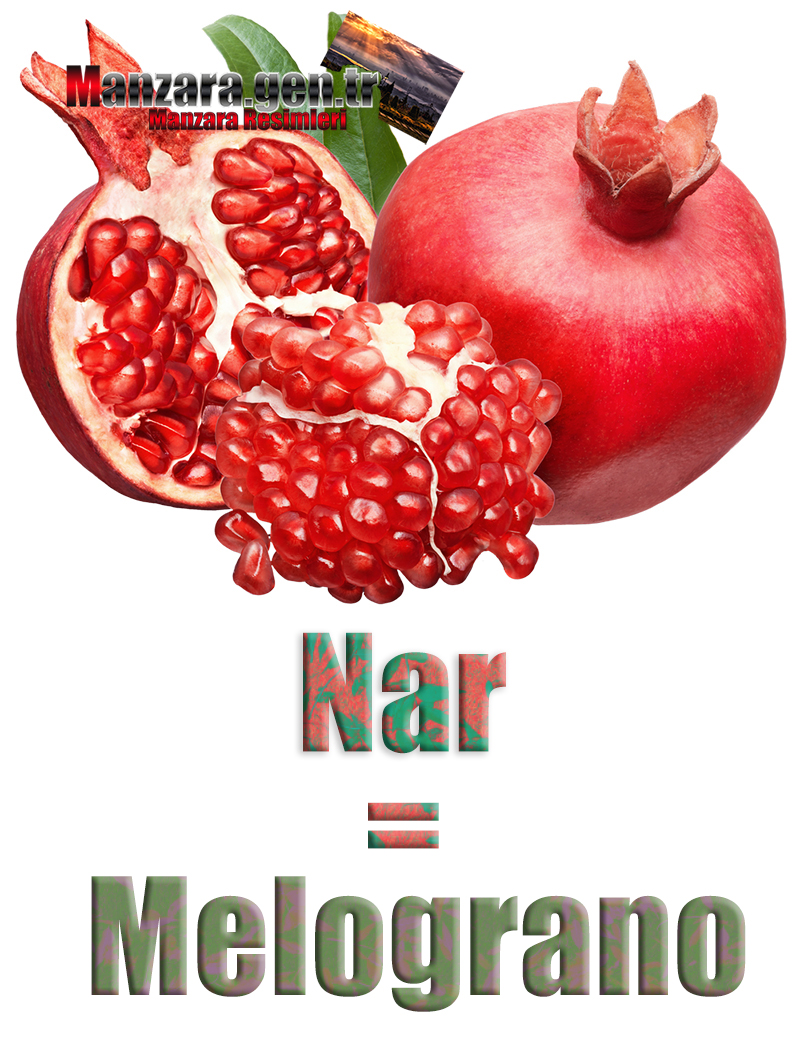 Narın İtalyancası Nedir ? Nar İtalyanca Nasıl Yazılır ? Che cos'è il turco in melograno? Come scrivere melograno in turco?