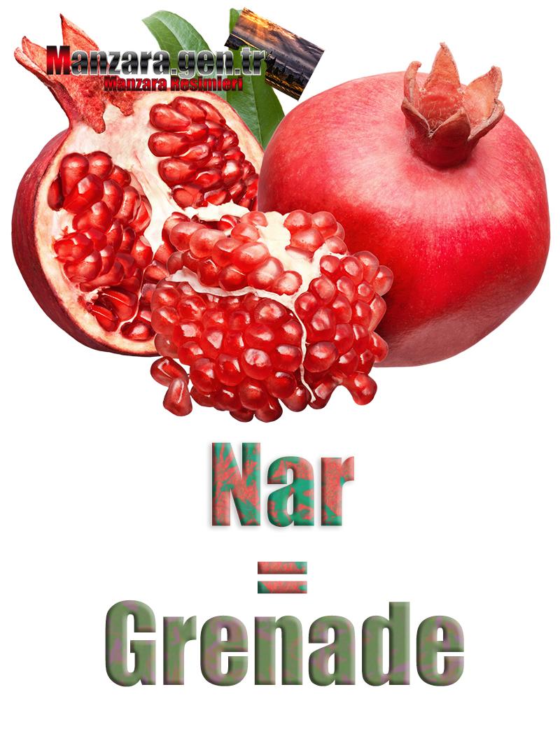 Fransızca Meyve İsimleri - Narın Fransızcası Nedir ? Nar Fransızca Nasıl Yazılır ? Quel est le turc de Grenade ? Comment écrire la Grenade en turc?