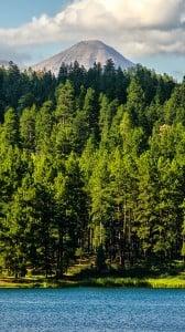 Orman Manzarası iPhone 6 plus