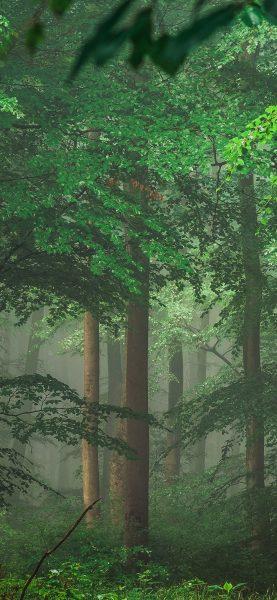 Orman ve Ağaçlar Mobil Arka Planlar
