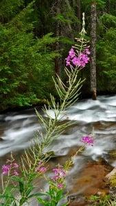 Orman ve Nehir Manzarası