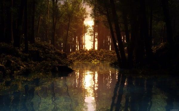 Orman yansıması