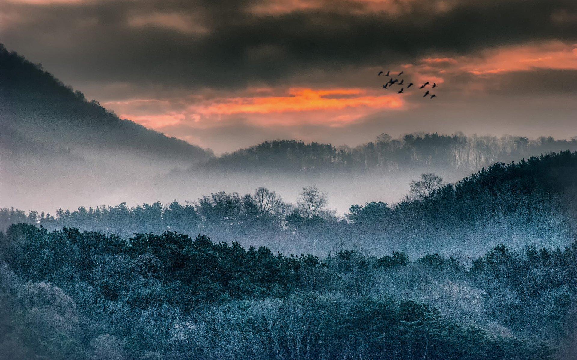 Ormanda Gün Batarken