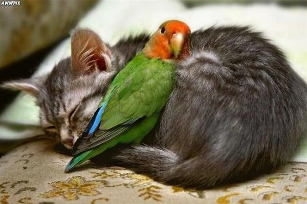 Papağan ve kedi