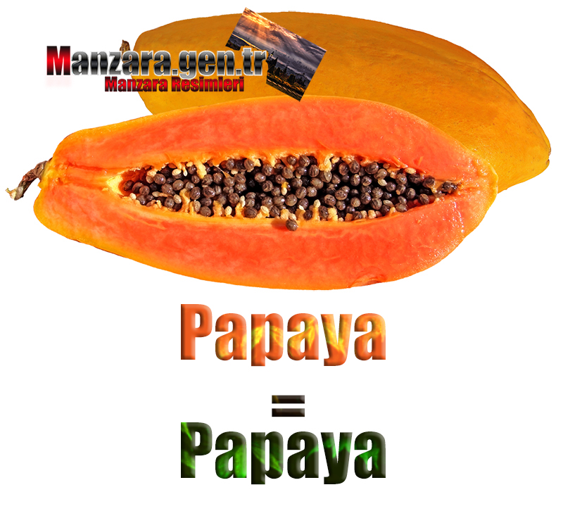 Almanca Meyve İsimleri - Papayanın Almancası Nedir ? Papaya Almanca Nasıl Yazılır ? Was ist papaya Türkisch? Wie schreibe ich papaya auf Türkisch?