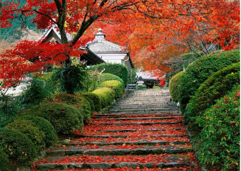 Sonbahardan Güzel Manzaralar - Parkta sonbahar