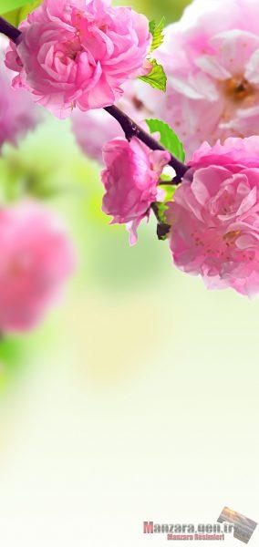 Pembe Çiçek Arka Planları Note 10 için