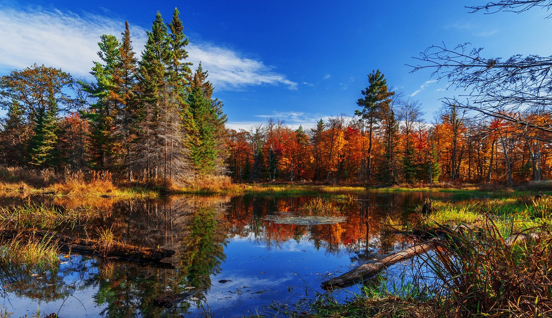 Renkli Orman Manzarası
