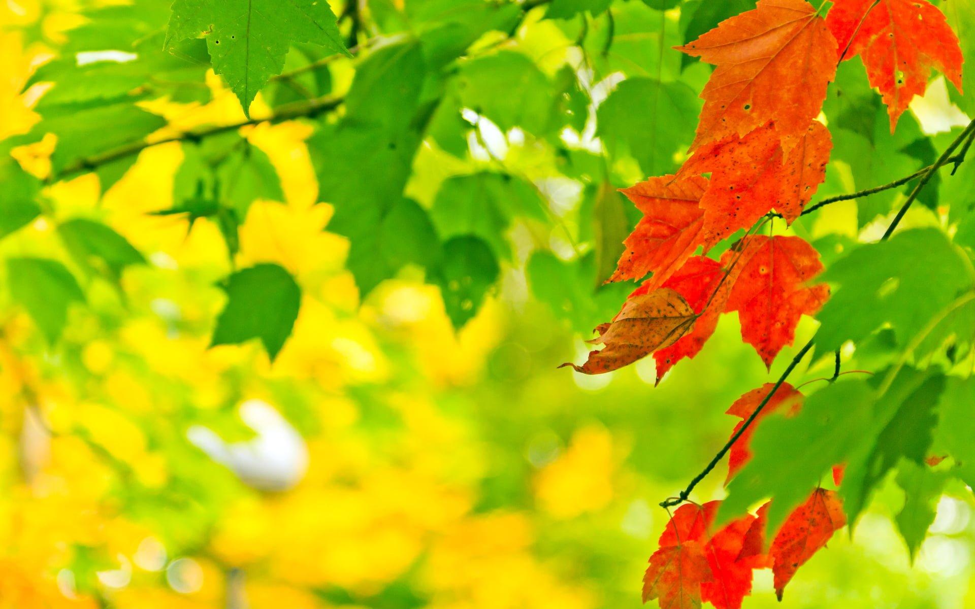 Renkli Yaprak Resimleri