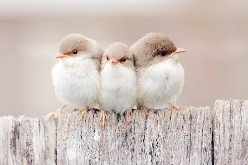 Süper üç kuş