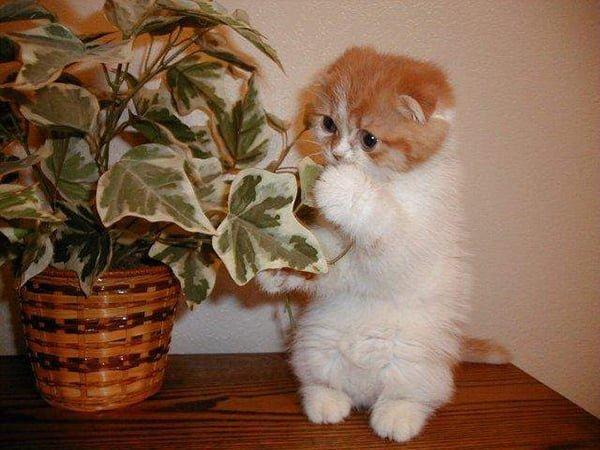 Süper şirin kedi