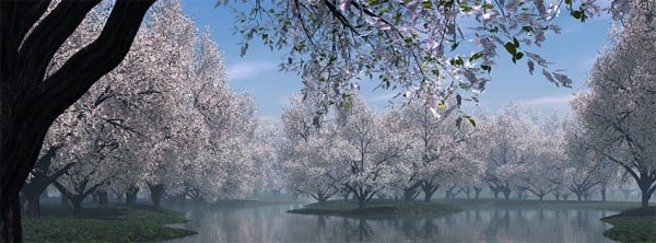 Sakura Ağacı Facebook Kapağı
