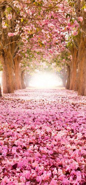 Sakura Ağaçları ve Yaprakları Manzarası