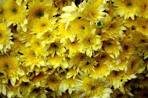 Sarı çiçek demeti resmi