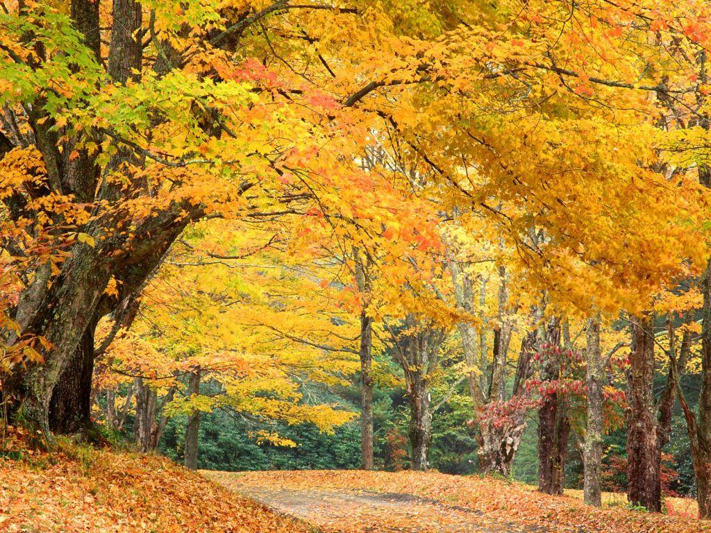 Sarı Ağaçlar ve Sonbahar