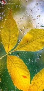 Sarı Yapraklar Duvar Kağıdı Note 8