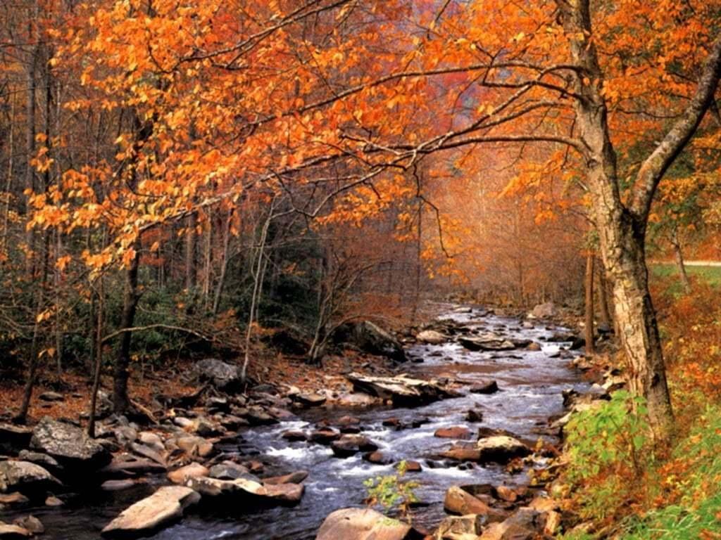 Sonbahardan Güzel Manzaralar - Sararmış Sonbahar Manzarası