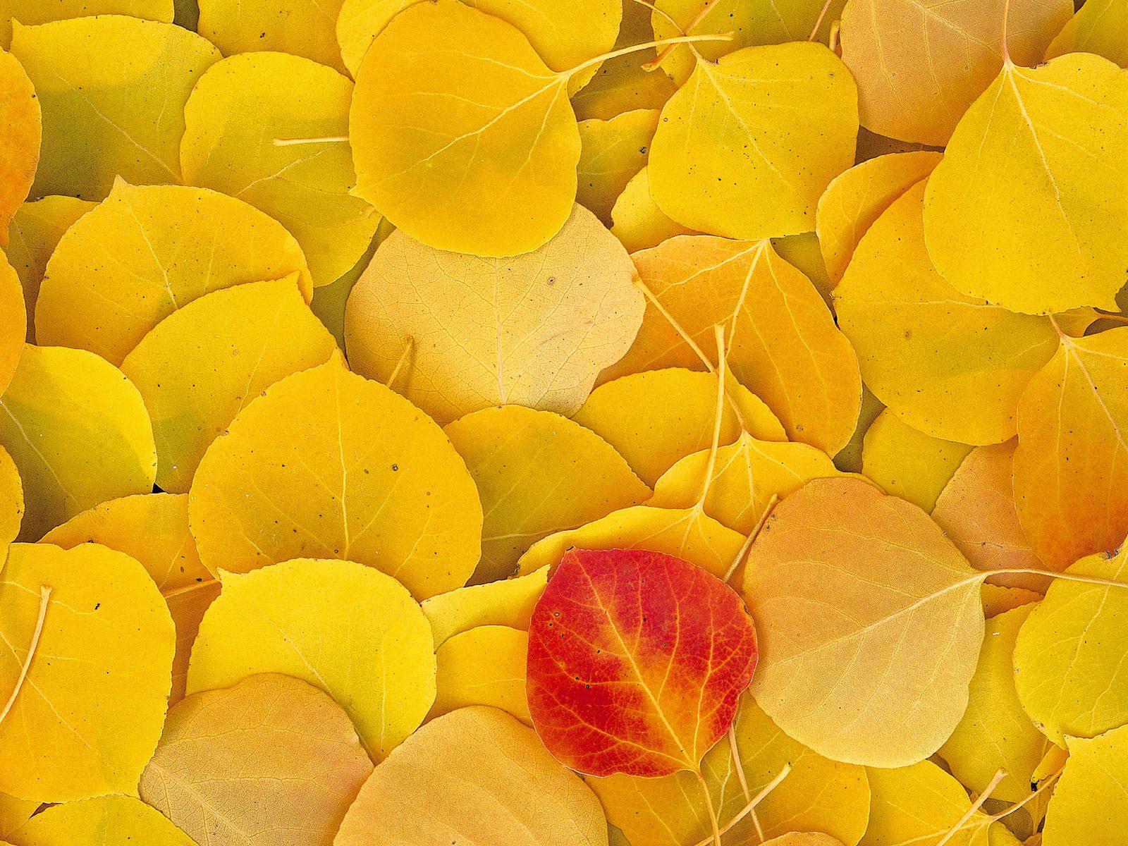 Sararmış Yapraklar
